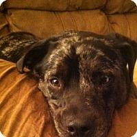 Adopt A Pet :: Pepper - Decatur, GA