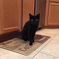 Adopt A Pet :: Edgar (KLL) 4.14.11 - Orlando, FL