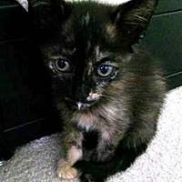 Adopt A Pet :: Mika - Tampa, FL