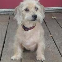 Adopt A Pet :: Kelvin - Greensboro, NC