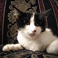 Adopt A Pet :: Ms. Fyre - Minneapolis, MN