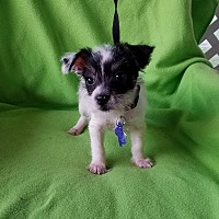 Adopt A Pet :: Talus - Jersey City, NJ