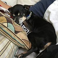 Adopt A Pet :: Rudy - Oviedo, FL