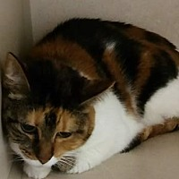 Adopt A Pet :: Bebe - Cheboygan, MI