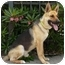 Photo 3 - German Shepherd Dog Mix Dog for adoption in Los Angeles, California - Chance von Cologne