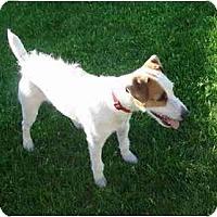 Adopt A Pet :: JACK 6 - Scottsdale, AZ