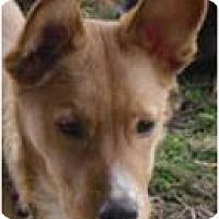 Adopt A Pet :: Quincy - Beachwood, OH