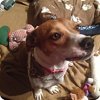 Adopt A Pet :: Penny - Alexandria, VA