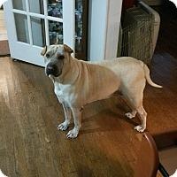 Adopt A Pet :: Grayson - Houston, TX
