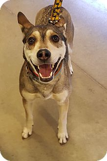 Husky Mix Dog for adoption in Detroit, Michigan - Princess-Adopted!