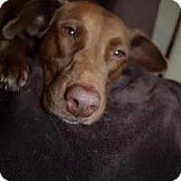 Adopt A Pet :: Chanel - Marlton, NJ