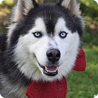 Adopt A Pet :: Elvis - Denver, CO
