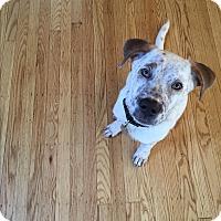 Adopt A Pet :: JJ Watt - Jersey City, NJ