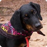 Adopt A Pet :: Titan - Decatur, GA
