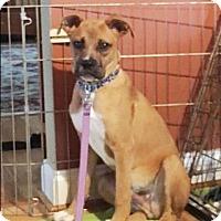 Adopt A Pet :: Texas - Lincolnton, NC