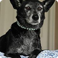 Adopt A Pet :: Clia - Gulfport, MS