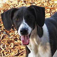 Adopt A Pet :: FRESCA - Red Bluff, CA