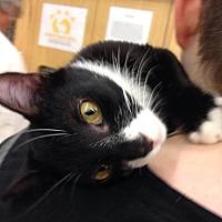 Adopt A Pet :: Poe - Sunset, LA