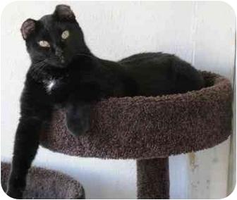 Domestic Shorthair Cat for adoption in Alden, Iowa - Zoe