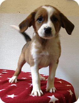 Terrier (Unknown Type, Medium) Mix Puppy for adoption in Kalamazoo, Michigan - Joy