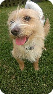 Cairn Terrier Mix Dog for adoption in Baton Rouge, Louisiana - Mia