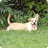Adopt A Pet :: Sugar Foot - Rock Hill, SC
