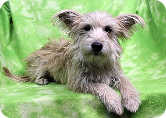 Terrier (Unknown Type, Medium) Mix Dog for adoption in Westminster, Colorado - Delphine