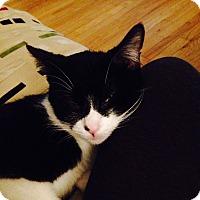 Adopt A Pet :: Valentina - Chicago, IL