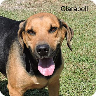 Hound (Unknown Type) Mix Dog for adoption in Slidell, Louisiana - Clarabell