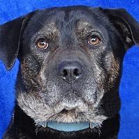 Adopt A Pet :: Jafar - Renfrew, PA