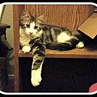 Adopt A Pet :: Omar - Lancaster, CA