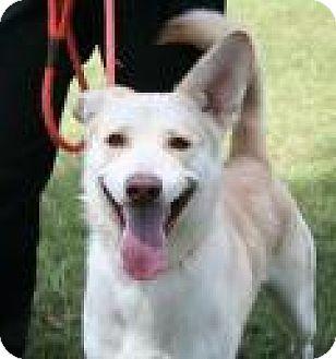 German Shepherd Dog Mix Dog for adoption in Columbia, Maryland - Kendall