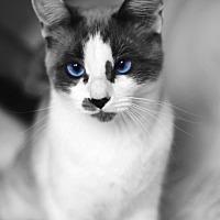 Adopt A Pet :: Paris aka Sweet Pea - Orange, CA