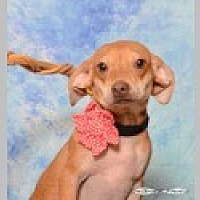 Adopt A Pet :: Maya - Pittsboro, NC