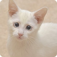 Adopt A Pet :: Snow White - Fowlerville, MI