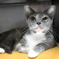 Adopt A Pet :: Sasha - St. Petersburg, FL