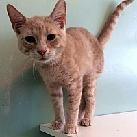 Adopt A Pet :: Leonard - Port Clinton, OH