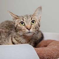 Adopt A Pet :: Ofelia - Mission Hills, CA