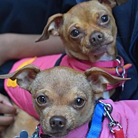 Adopt A Pet :: Holli and Honee Higgins - a bonded pair - Seattle, WA