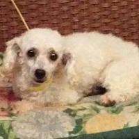 Adopt A Pet :: Vinny - Tulsa, OK