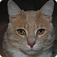 Adopt A Pet :: Scooby - Monroe, NC