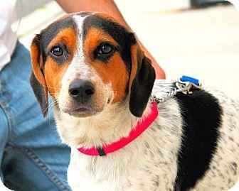 Beagle Mix Dog for adoption in Manahawkin, New Jersey - Jenni