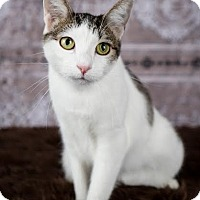 Adopt A Pet :: Lil Nell - Eagan, MN