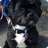 Adopt A Pet :: Raisin - Rockaway, NJ