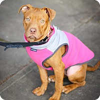 Adopt A Pet :: Lakelyn - Reisterstown, MD