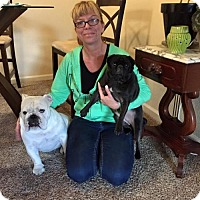 Adopt A Pet :: Zabba - Sacramento, CA