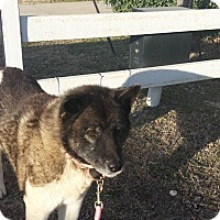 Adopt A Pet :: Duchess - Toms River, NJ