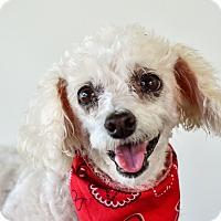 Adopt A Pet :: Pink - Calgary, AB