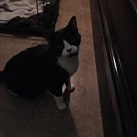 Adopt A Pet :: Ditto - Lauderhill, FL