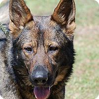 Adopt A Pet :: Abby AD 05-06-17 - Preston, CT